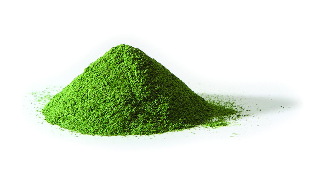 moringa oleifera in polvere