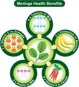 Digestione sana con la moringa oleifera