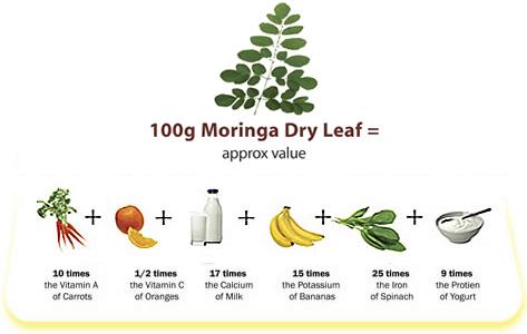 Moringa oleifera benefici