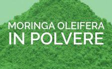 Moringa oleifera in polvere dove si compra e proprietà