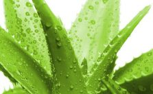 Aloe vera gel: benefici, proprietà e dove si compra