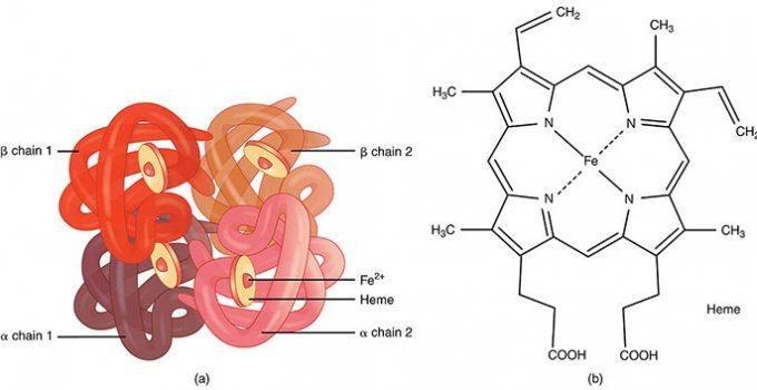 emoglobina-bassa