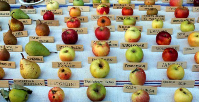 quante calorie ha una mela
