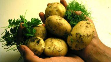Le patate fanno ingrassare